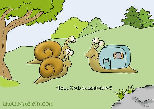 hollaenderschnecke